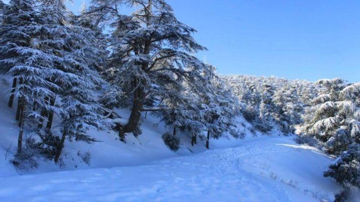 neige-algrie-facebook-1-714x400